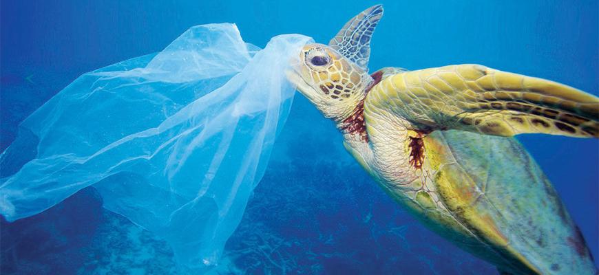 Schildpad-plastic-tas